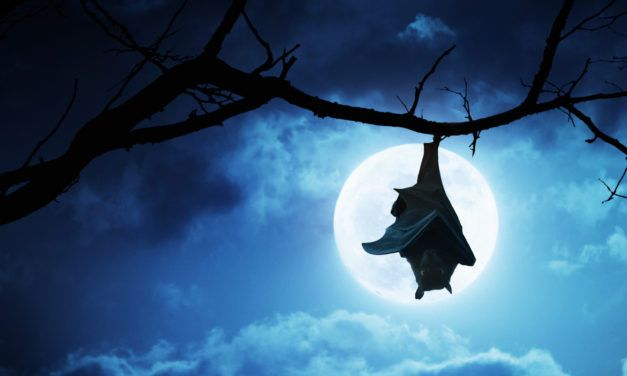 Does a Bat Flying in a House mean a Ghost?