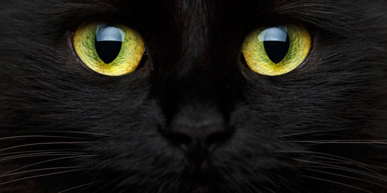 Many Black Cat Superstitions